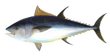 https://i1.wp.com/nwasianweekly.com/wp-content/uploads/2013/32_03/world_tuna.JPG