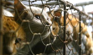 Taiwan bans sale, consumption of dog and cat meat