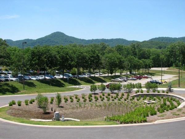 rain garden plants south carolina Rain Gardens – A Solution for Runoff | Gardening in the