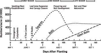 Phases of Cotton development chart