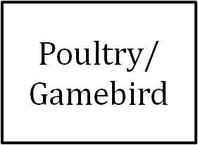 Poultry/Gamebird