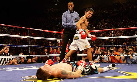 Beginner Boxer