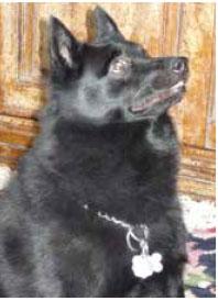 Bear / Black dog