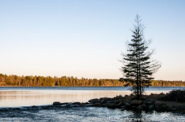 USA-Minnesota, Itasca State Park (Headwaters of the Mississippi River)