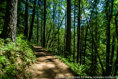 US: Oregon, Columbia River Basin, Columbia Gorge, Eagle Creek Trail