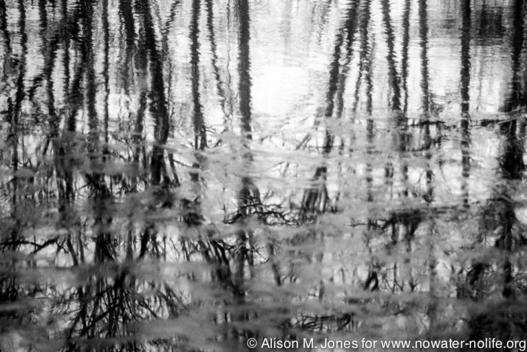New Jersey: Mountainville, reflections of trees in water