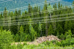 Canada: British Columbia, power transmission lines above Downie Creek, felled logs for path of those lines