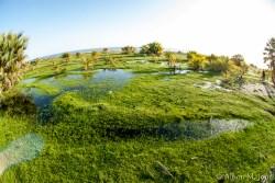 Africa: Kenya; Eliye Springs on Lake Turkana, coastal wetlands