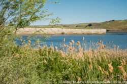 USA: Washington, Columbia River Basin, Snake River Basin, Pasco, Big Flat Habitat Management Unit (USACE), phragmites (invasives)