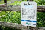 Rain gardens filter stormwater runoff