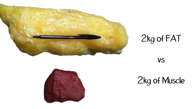 2kg fat vs 2kg muscle comparison