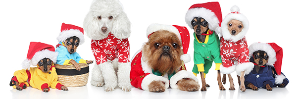 A group of festively dressed dogs