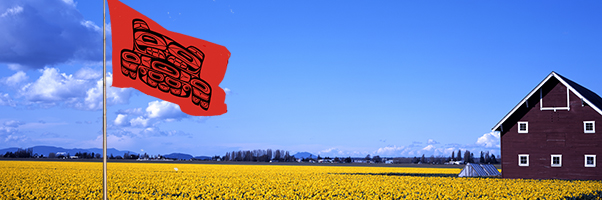 A Daffodil field in Skagit Co. behind an Upper Skagit Indian Tribe flag
