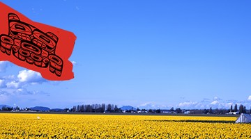 A Daffodil field in Skagit Co. behind an Upper Skagit Indian Tribe flag