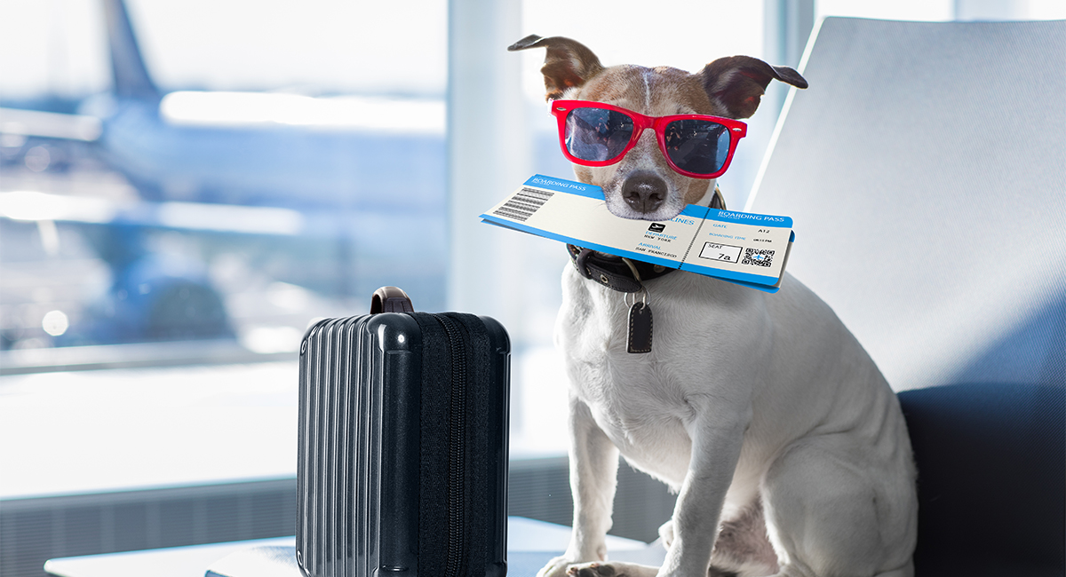 Taming the Skies: What's on the Itinerary for Service Animals and Airlines