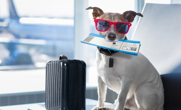 A dog in an airport terminal on vacation