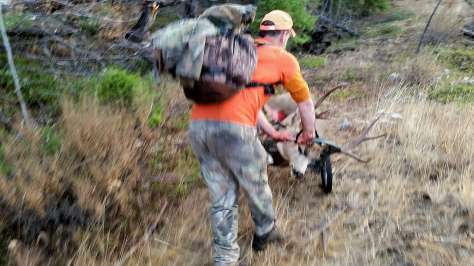 AN OKANOGAN COUNTY MULE DEER HUNTER CARTS HIS FOUR-POINT OUT OF THE WOODS. (TOM WALGAMOTT)