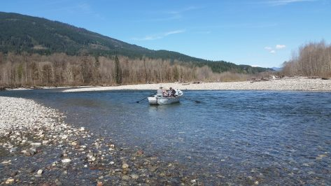 Skagit-Sauk C&R Steelhead Fishery Scratched Due To Lower Run Forecast
