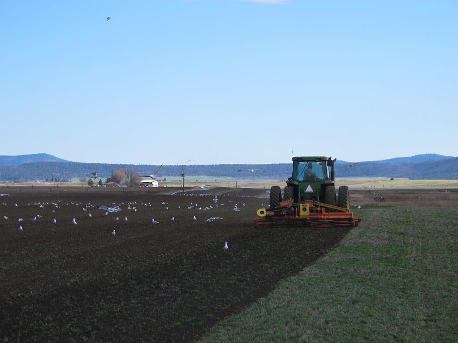 northwest hay and forage tiller