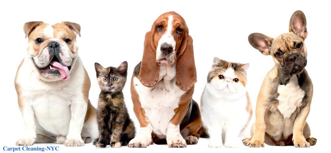 Pet Odor Carpet Cleaning Service Www Allaboutyouth Net