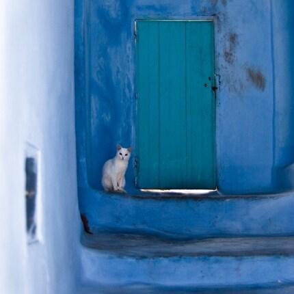 Waiting White Cat - print
