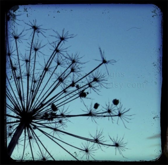 STALKS IN BLUE - Original TtV Fine Art Photography Print - Signed and Dated --BUY 2 GET 1 FREE--