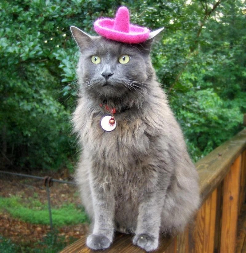 Sombrero for Cats or Dogs - Pink Fancy
