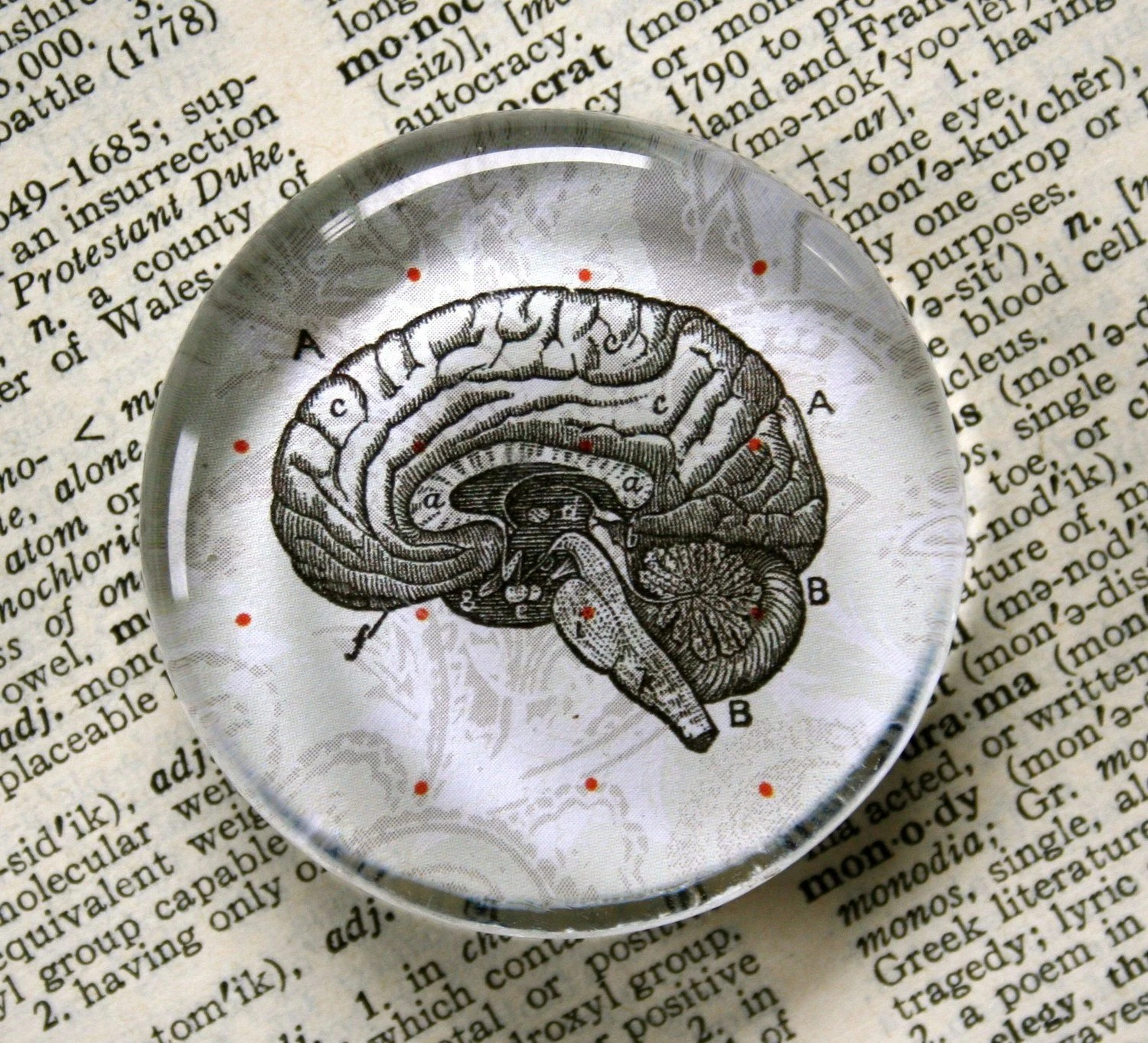 Brains Jumbo Glass Magnet for Zombie Lovers