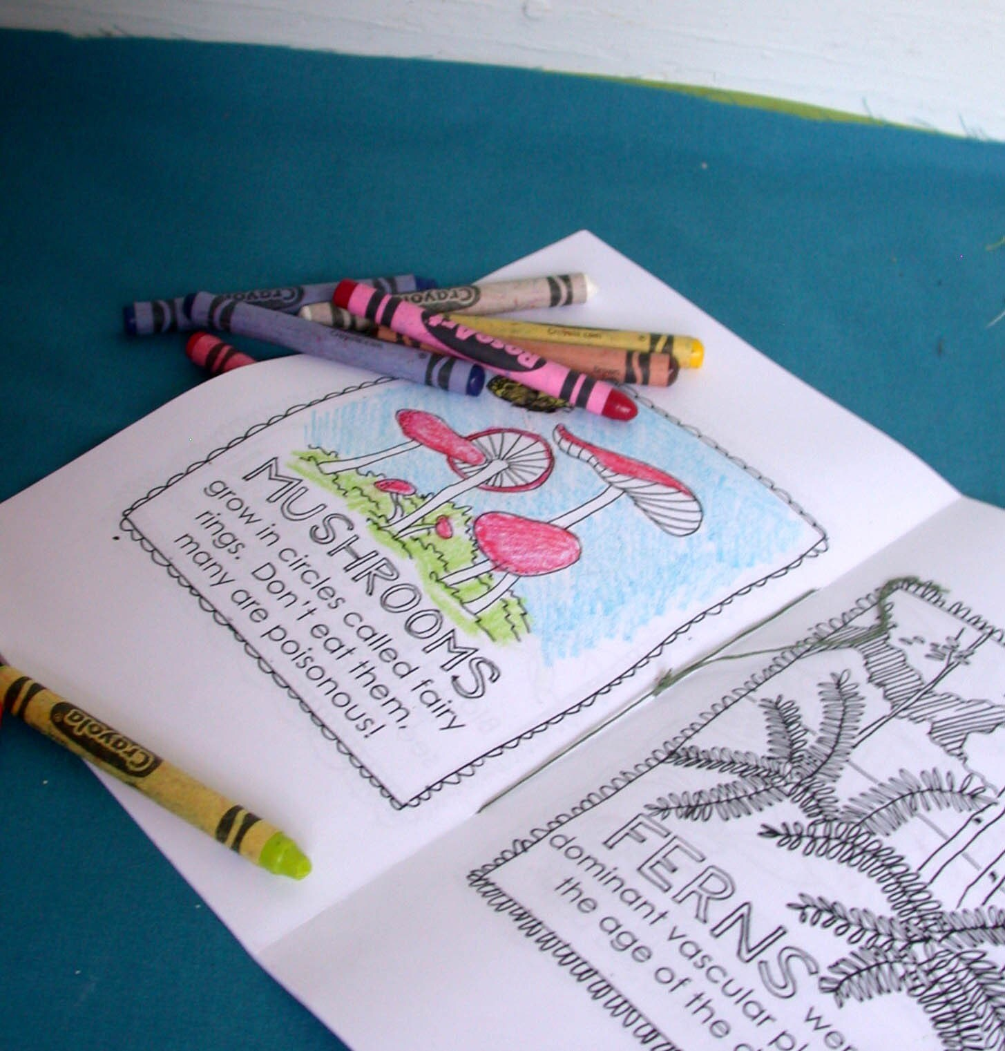 Printable Beetles For Kids 9jasports