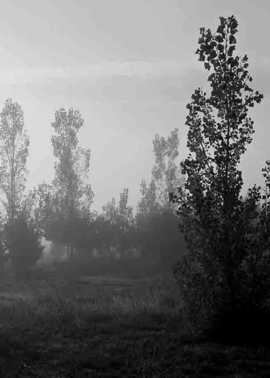 ACEO - black and white photograph of trees in the mist