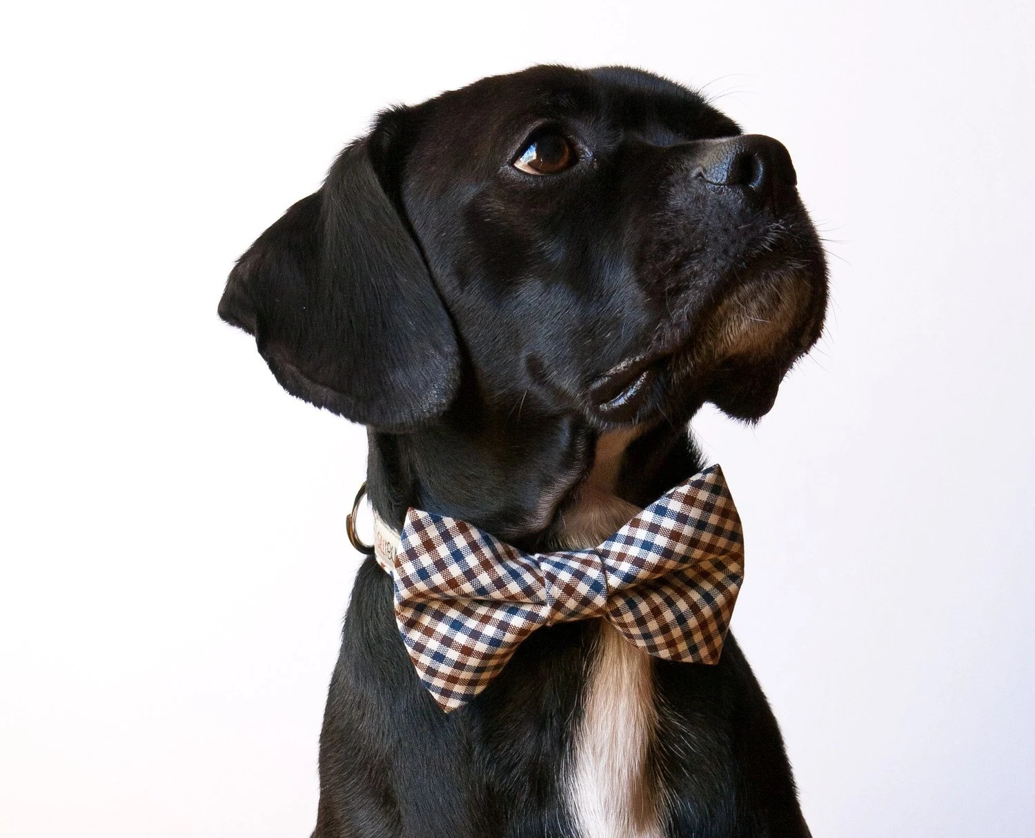 Farmer Checks Bow Tie Dog Collar