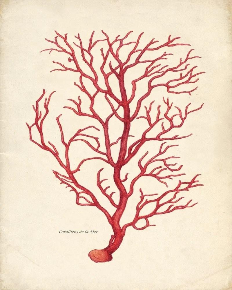Vintage Sea Coral Print - Branch Coral 8x10