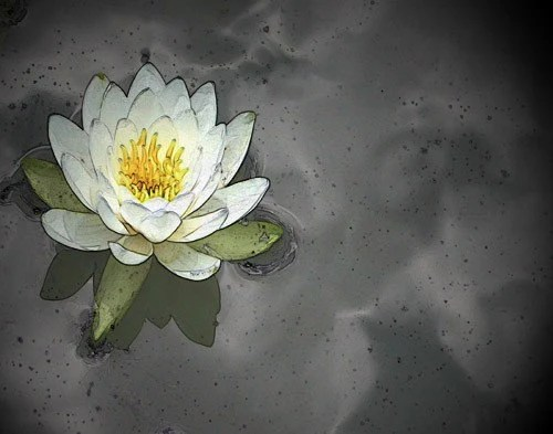 Water Lily on a Cloudy Day, by Carolyn, EBSQ 11x14