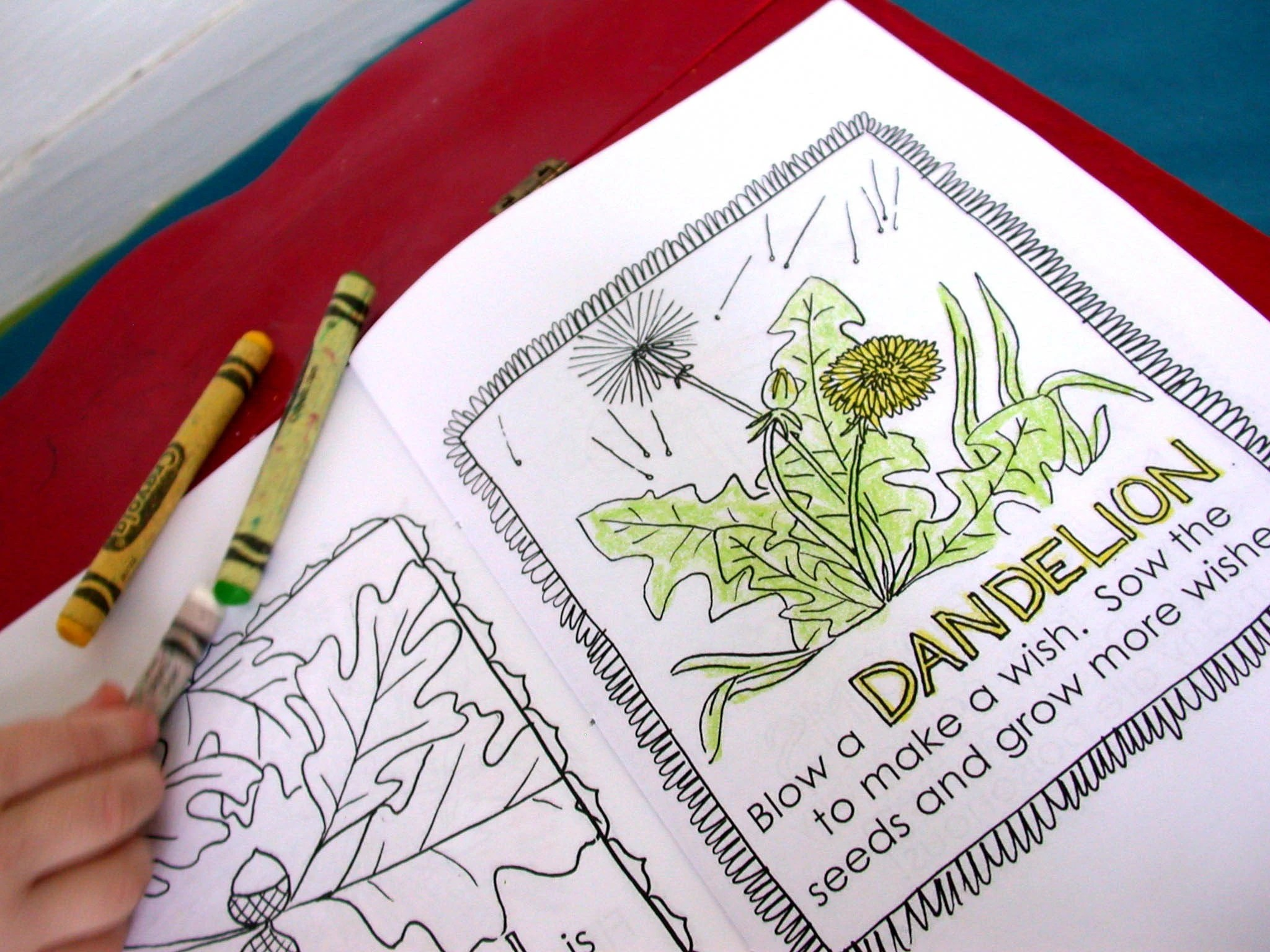 Printable Beetles For Kids 9jasports