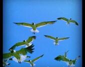 The Birds - 5x5 print