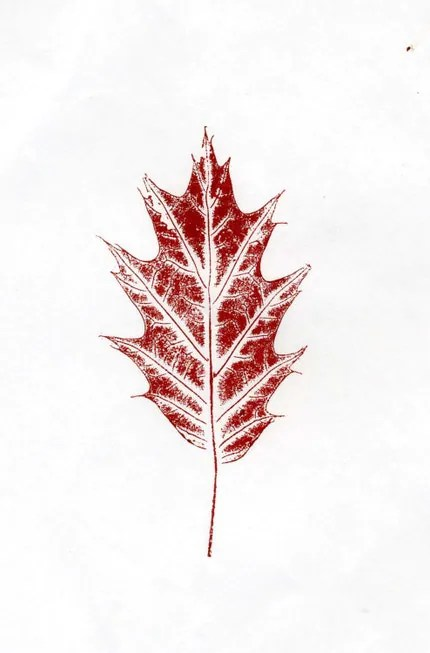 Little Red Oak Leaf is an original nature print.