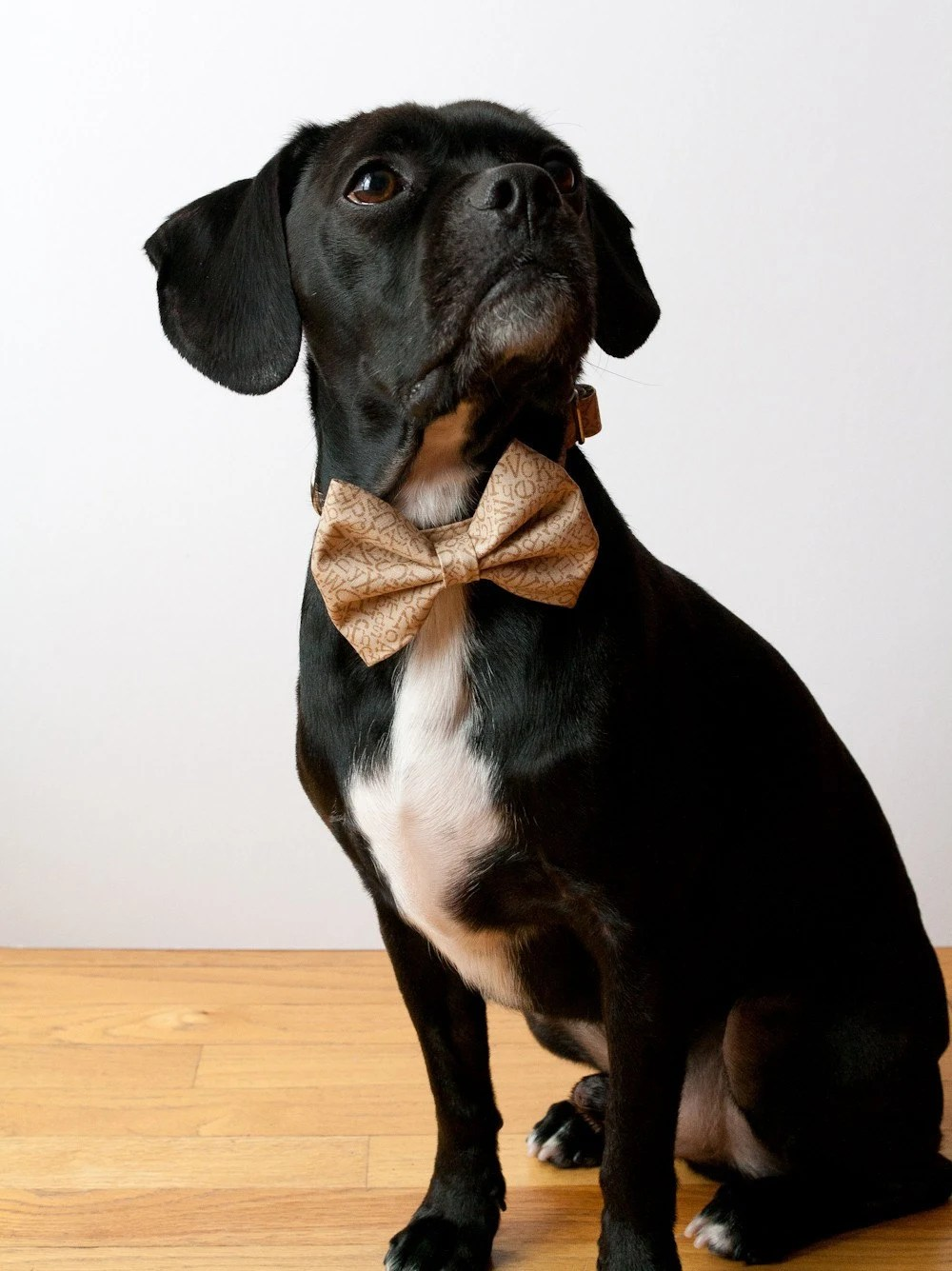 Alphabet Bow Tie Dog Collar
