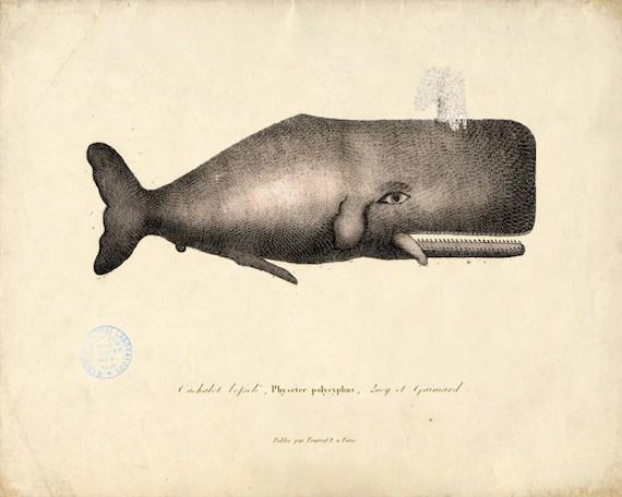 Antique Whale Print No. 3