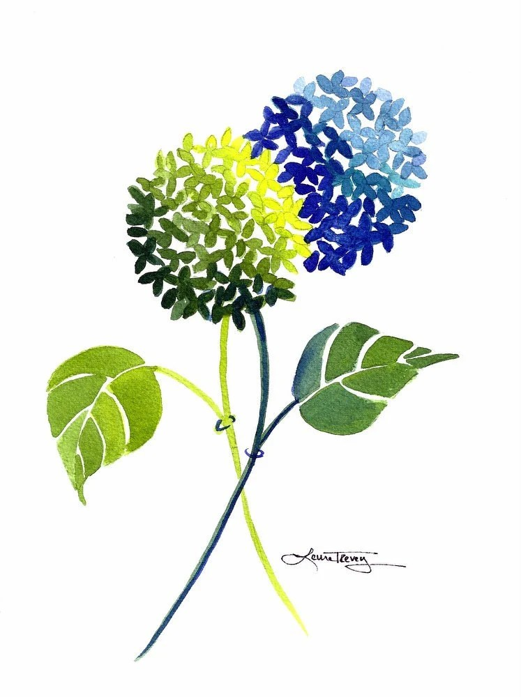 Blue and Green Hydrangea