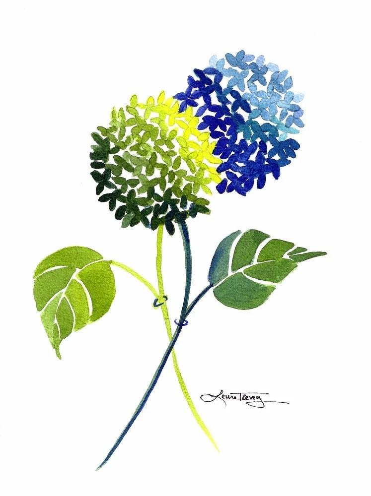 Blue and Green Hydrangea