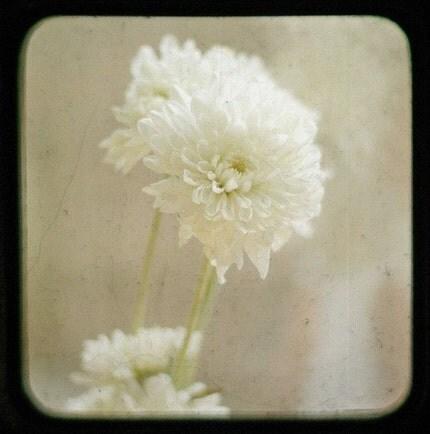 Fleur   TTV 5 by 5 Fine Art Photograph