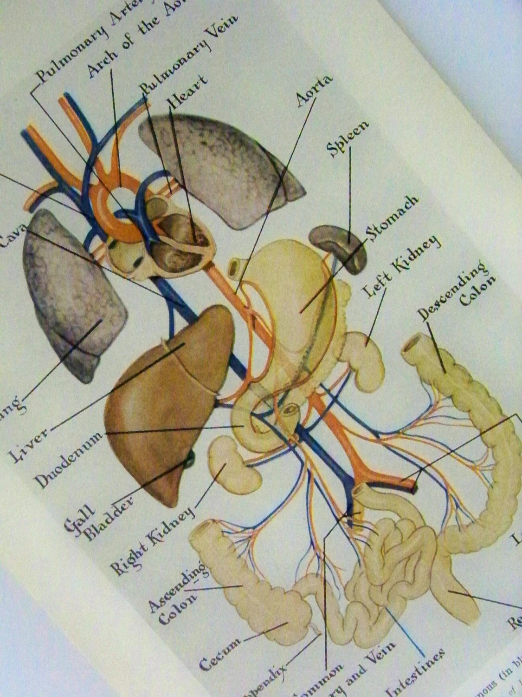 Blank Heart Diagram For Kids
