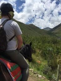 Pony Lesotho