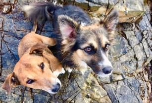 Bruno and Bonny