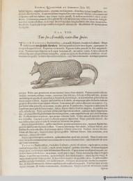 ArmadilloHistoria naturalis Brasiliae, 1648, page 231.