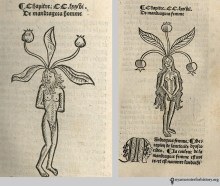 Another couple's costume: mandrakes from Prüss' Ortus sanitatis, circa 1497. We recommend opting for a less naked version.