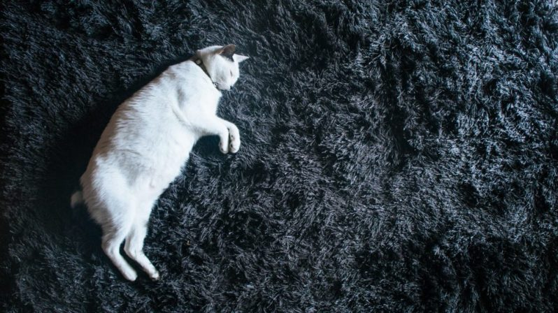 会社説明会をドタキャンした猫