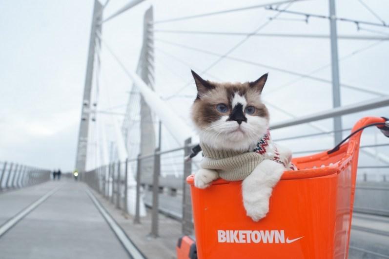 OB訪問の就活サービスを利用中の猫