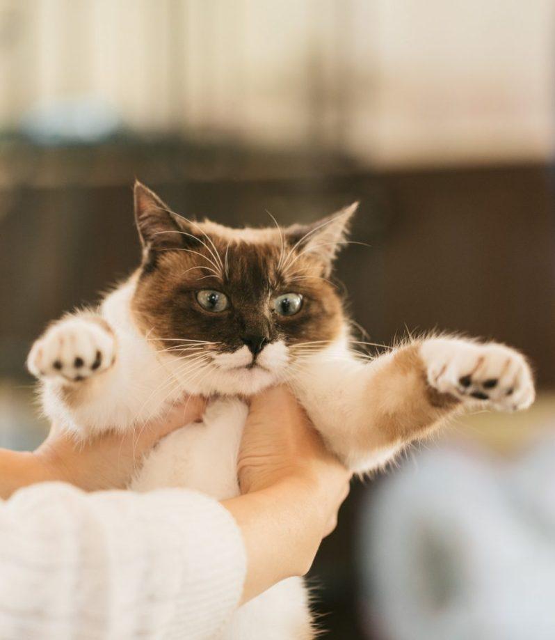 シェアリングエコノミー事業で貸し出される猫