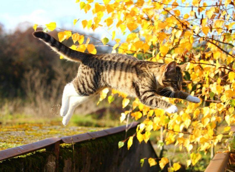 やりたいことを原体験から考えることの危険性に気づいていない猫